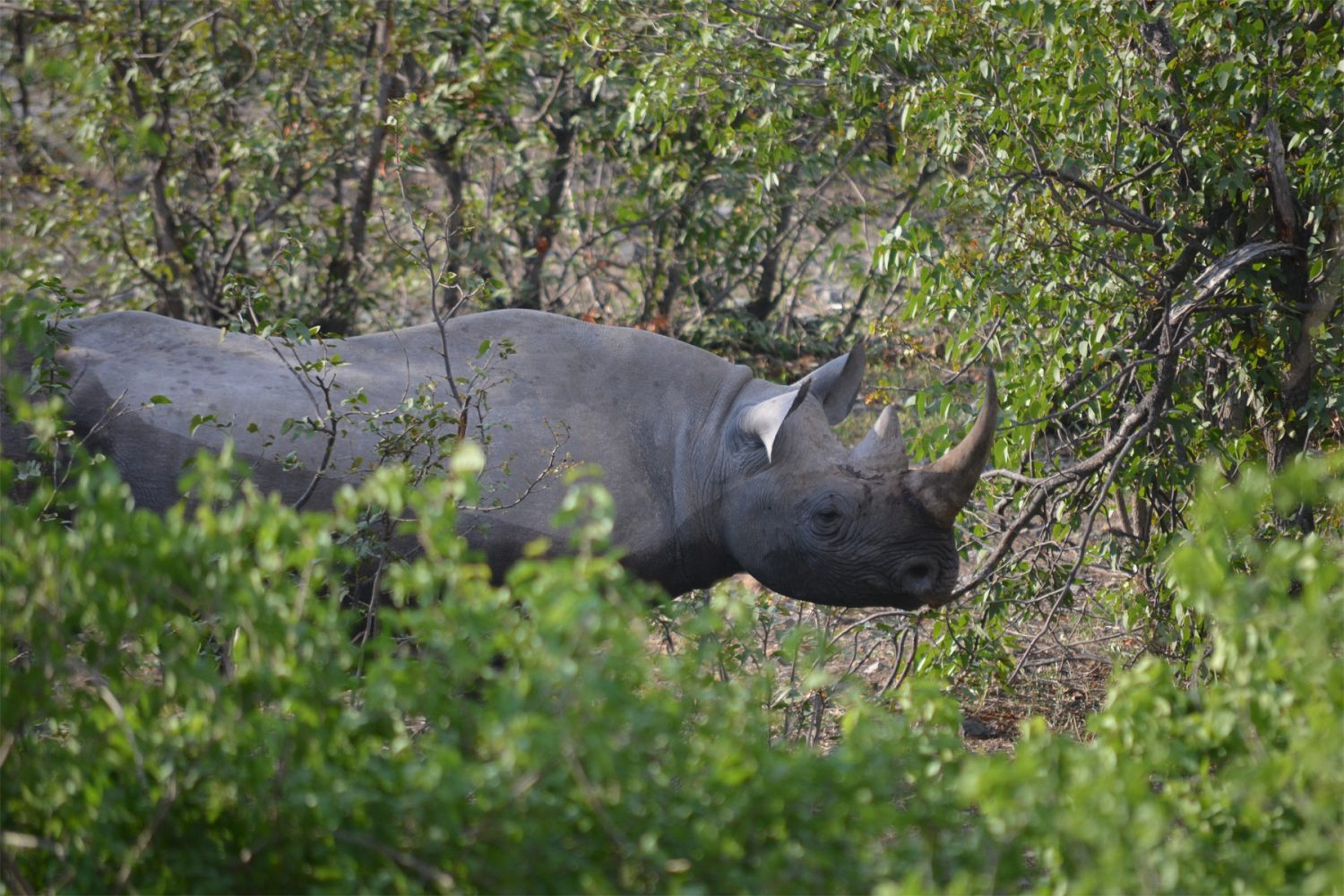 13 DAYS UGANDA WILDLIFE SAFARI